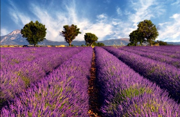 provence-lavender-field.dory1506.flkr_